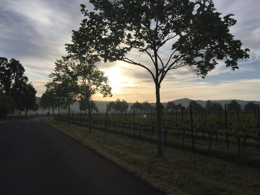 Sunset in the Vineyard at Trefethen Family Vineyards